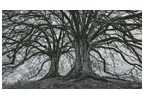 Branching Out - Black and White - Cross Stitch Chart