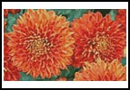 Chrysanthemums - Cross Stitch Chart