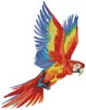 Colourful Macaw - Cross Stitch Chart