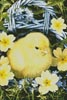 Easter Chick in Basket - Cross Stitch Chart