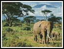 Elephants - Cross Stitch Chart
