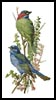 Finch and Blue Bird - Cross Stitch Chart