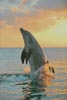 Golden Sunset Dolphin - Cross Stitch Chart
