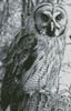 Owl Photo Black and White (Crop) - Cross Stitch Chart