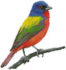 Painted Bunting - Cross Stitch Chart