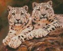 Pair of Young Snow Leopards - Cross Stitch Chart