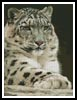 Snow Leopard 2 - Cross Stitch Chart