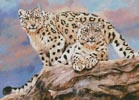 Snow Leopards on a Rock - Cross Stitch Chart