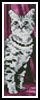 Tabby Bookmark - Cross Stitch Chart