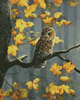 Tawny Owl - Cross Stitch Chart