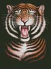 Tiger - Cross Stitch Chart